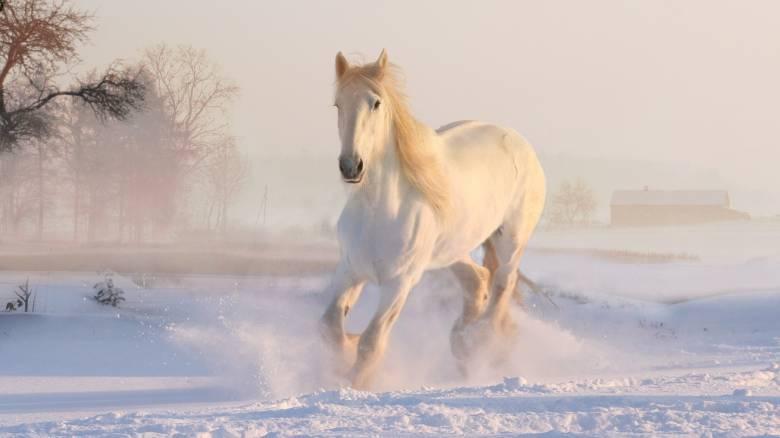 Εικόνες «άγριας» ομορφιάς στο Μέτσοβο: Δύο άλογα κάνουν βόλτα στο χιονισμένο τοπίο