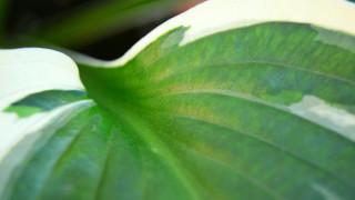 Η βιολογική επανάσταση που αναπτερώνει τις ελπίδες του πλανήτη