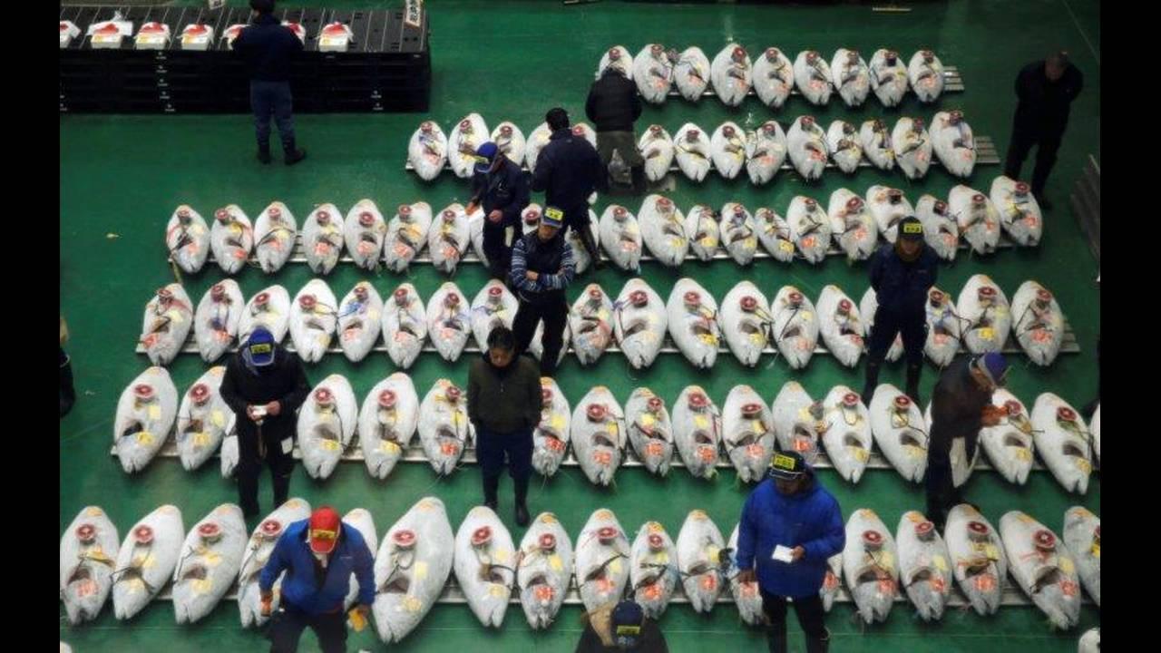 https://cdn.cnngreece.gr/media/news/2019/01/05/160699/photos/snapshot/2019-01-04T223115Z_586125818_RC1CD9DFB4B0_RTRMADP_3_NEW-YEAR-JAPAN-TUNA-AUCTION.jpg