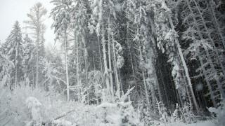 Κάτω από το χιόνι όλη η Βαυαρία: Σε κατάσταση συναγερμού λόγω χιονοστιβάδων – Νεκρή μία σκιέρ