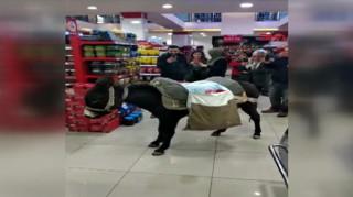 Τουρκία: Πηγαίνουν στο σούπερ μάρκετ με... γαϊδούρια για να μην πληρώσουν σακούλα!