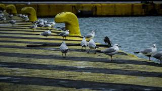 Καιρός: Απαγόρευση απόπλου από Πειραιά για ανατολικό Αιγαίο, Κυκλάδες, Κρήτη και Δωδεκάνησα