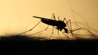 Τέλος στον εφιάλτη των… κουνουπιών με νέα πρωτοποριακή ανακάλυψη