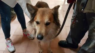Έγκλημα στην Κέρκυρα: Υιοθετήθηκε ο σκύλος της δολοφονημένης Αγγελικής