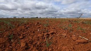 Περιβαλλοντική «βόμβα» στην Αυστραλία: Όχθες ποταμών κατακλύστηκαν από νεκρά ψάρια