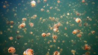 Παλάου: Ανοιχτή για τους τουρίστες η λίμνη με τις μέδουσες μετά την οικολογική «ανάρρωσή» της