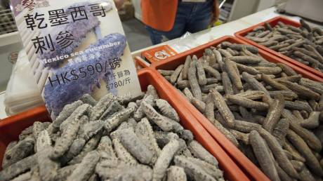 Όλοι κυνηγούν το «αγγούρι της θάλασσας»: Νεκροί δύτες για τον μεζέ που αξίζει έως και 3.000 ευρώ