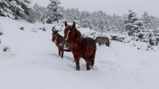 Αγρίνιο: Άγνωστοι πυροβόλησαν και σκότωσαν τρία άγρια άλογα