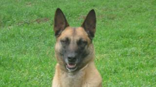 Θλίψη για την Άγκνες: Πέθανε η σκυλίτσα-θρύλος της Δίωξης Ναρκωτικών