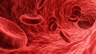 Επιστημονική πρωτιά: Δημιουργήθηκαν τέλεια αιμοφόρα αγγεία στο εργαστήριο