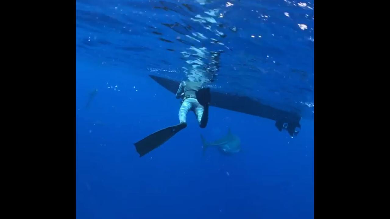 https://cdn.cnngreece.gr/media/news/2019/01/18/162318/photos/snapshot/shark5.PNG