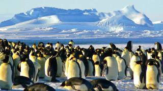 Οι «νικητές» και οι «χαμένοι» του ζωικού βασιλείου λόγω της κλιματικής αλλαγής