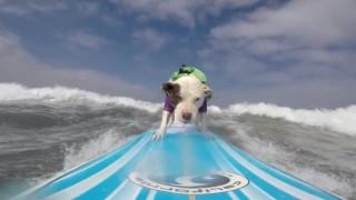 Η Faith, το πίτμπουλ που δαμάζει τα κύματα, γίνεται viral
