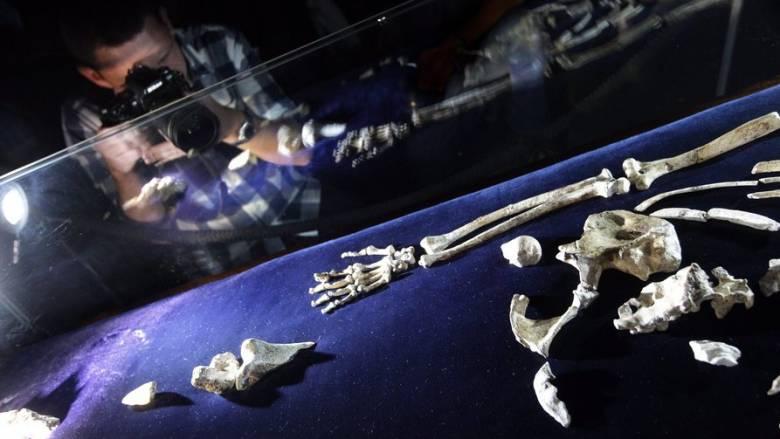 Το οικογενειακό δέντρο της ανθρωπότητας αποκαλύπτεται: «Μίλησαν» τα απολιθώματα Αυστραλοπίθηκου