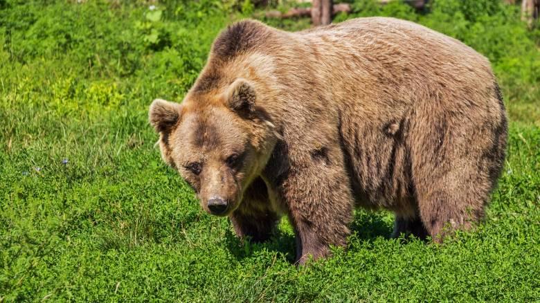 Σάλος στην Αλάσκα: Πατέρας και γιος σκότωσαν μαμά αρκούδα και τα αρκουδάκια της