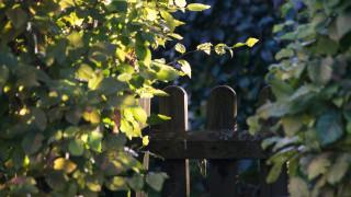 Θεσσαλονίκη: Βρήκαν βασιλικό πύθωνα μέσα σε ένα κουτί στην αυλή τους
