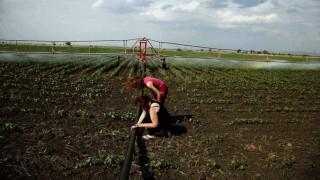 Επιδοτήσεις 14.000 ευρώ σε επαγγελματίες γεωργούς: Πώς μπορείτε να υποβάλετε αίτηση και ως πότε