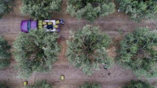 Επιδοτήσεις 14.000 ευρώ σε επαγγελματίες γεωργούς: Πώς να υποβάλετε αίτηση
