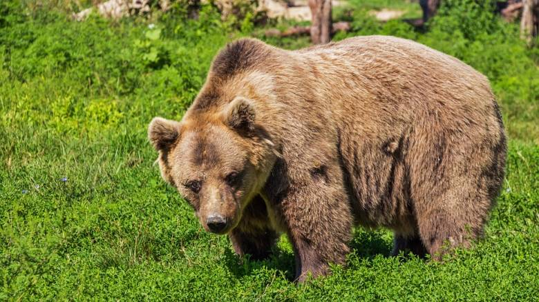 «Μας λέει ότι έκανε παρέα με μια αρκούδα»: Αγοράκι επιβίωσε 48 ώρες μόνο του στο δάσος