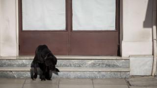 Δολοφονία σκυλίτσας «Μάγκυ»: 15 μήνες με αναστολή στον ιδιοκτήτη της ταβέρνας