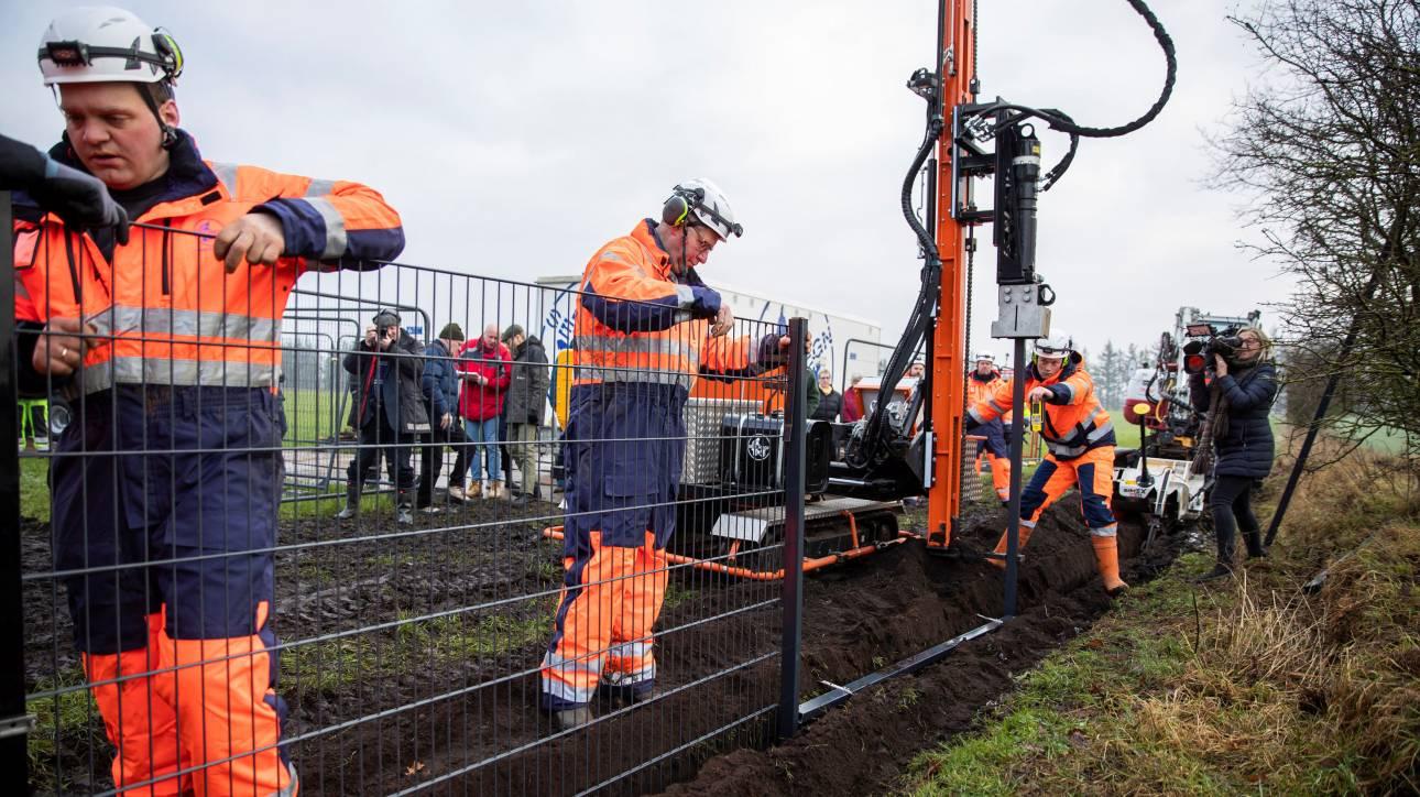 Η Δανία κατασκευάζει φράχτη στα σύνορα με τη Γερμανία για τα... γουρούνια