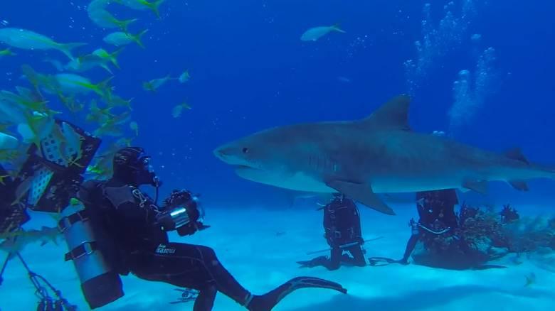 Μοναδικές εικόνες: Καρχαρίες κάνουν... παρέα με δύτες και «χαμογελούν» στην κάμερα