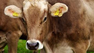 Διατροφικό σκάνδαλο συγκλονίζει την ΕΕ: Η Πολωνία εξήγαγε 2.700 κιλά «ύποπτο» κρέας