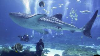 Καρχαρίας... vegan εκπλήσσει τους επιστήμονες