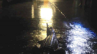 Αυστραλία: «Πνίγηκε» το Κουίνσλαντ - Κροκόδειλοι και φίδια στις γειτονιές από τις πλημμύρες