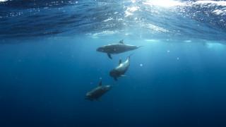 Γιατί θα αλλάξουν χρώμα οι ωκεανοί του πλανήτη;