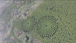 Λύθηκε το μυστήριο με τους απόκοσμους κύκλους από δέντρα στην Ιαπωνία