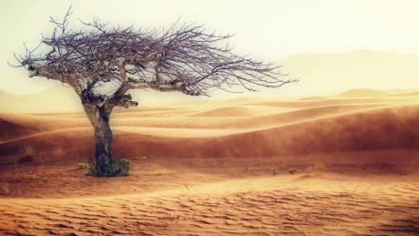 OHE: «Ψήνεται» ο πλανήτης τα τελευταία τέσσερα χρόνια