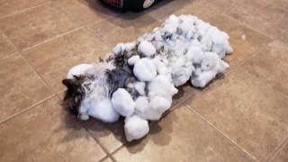 Γάτα… κατεψυγμένη: Η Φλάφι έχασε μια ζωή αλλά βγήκε ζωντανή και… φουντωτή απ'τον χιονιά