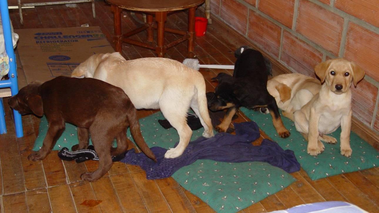 Κάθειρξη έξι χρόνων για τον κτηνίατρο που διακινούσε ηρωίνη μέσω… κουταβιών