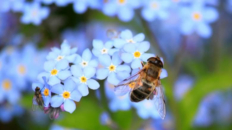 Οι μέλισσες ξέρουν καλύτερα μαθηματικά από σένα - Το επιβεβαιώνει και η επιστήμη!