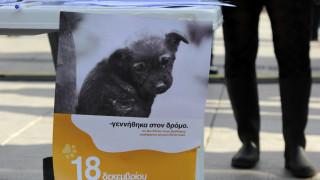 Γιατί «ναυάγησε» η συνταγματική κατοχύρωση της προστασίας των ζώων
