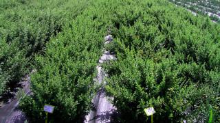 Οι φαρμακευτικές ιδιότητες των ελληνικών αρωματικών φυτών