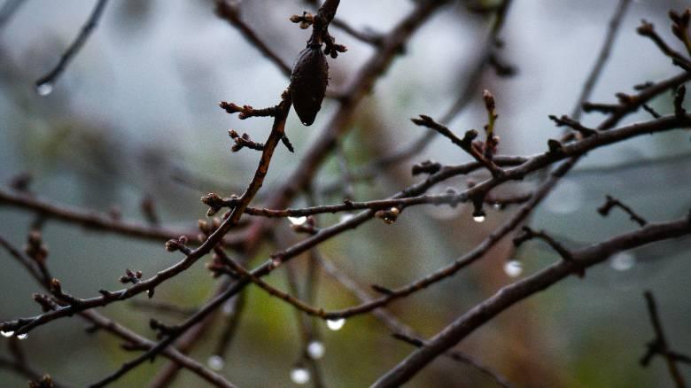 Καιρός: Άνοιξη πριν από την ψυχρή «εισβολή»