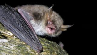 Μεγάλωσε η οικογένεια των νυχτερίδων με δυο νέα είδη