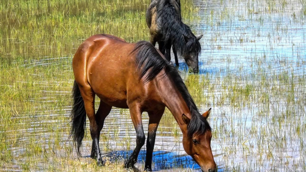 Θεσπρωτία: Σκότωσαν έξι άλογα με κυνηγετικό όπλο