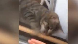 Απίστευτο βίντεο: Γατάκι βοηθά την ιδιοκτήτριά του που κλειδώθηκε απ' έξω να μπει στο σπίτι!