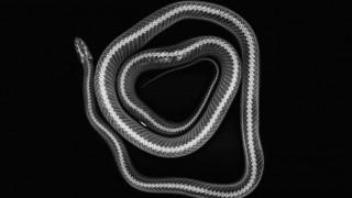Πώς φαίνονται τα ζώα σε ακτινογραφίες; Ο ζωολογικός κήπος του Λονδίνου μάς κατατοπίζει