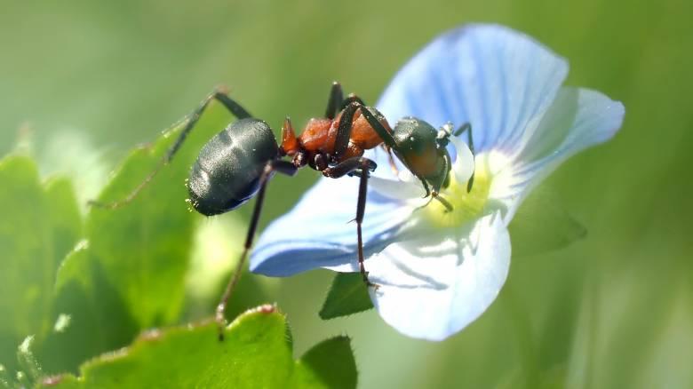 Το ελληνικό… μυρμήγκι που παρακολουθεί την πτώση της τιμής των προϊόντων