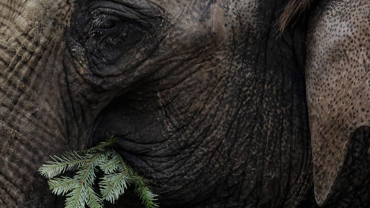 Μποτσουάνα: Σάλος από την απόφαση της κυβέρνησης για το κυνήγι ελεφάντων