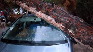 Νέα Σμύρνη: Έπεσε δέντρο και καταπλάκωσε οχήματα