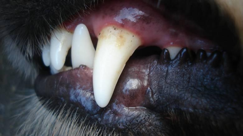 Επίθεση από αγέλη σκυλιών δέχτηκε άνδρας στα Μελίσσια