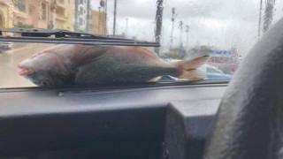 Μάλτα: Η ισχυρή βροχόπτωση έφερε ψάρια από τον ουρανό (vids&pics)