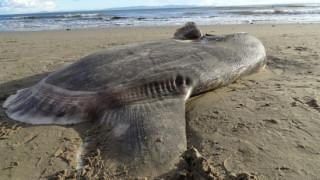 Τρομακτικές εικόνες στην Καλιφόρνια: Μυστηριώδες πλάσμα ξεβράστηκε σε παραλία