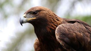 Δύο σπάνια πουλιά δηλητηριάστηκαν στον Έβρο