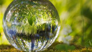 Ο πλανήτης έγινε πιο πράσινος: Δύο χώρες δεντροφύτευσαν έκταση στο μέγεθος του δάσους του Αμαζονίου